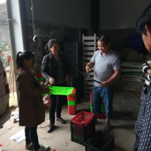 太和縣 預售自家種植四季桑葚果,歡迎新老客戶前來選購