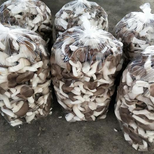 无锡秀珍菇