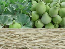 吉林省通化市柳河县菜葫芦 干葫芦条 袋装 1斤以上 统货