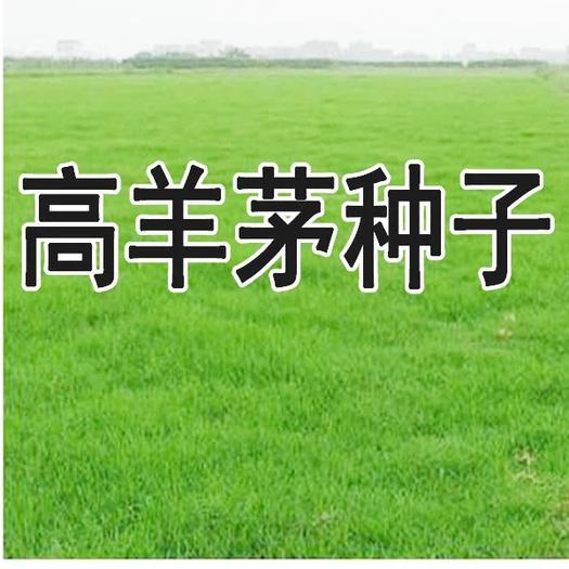 徐州新沂市高羊茅种子 草坪种子高羊茅种籽矮生狗牙根免修剪耐踩踏黑麦草护坡四季青草籽