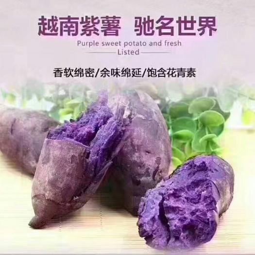 龍州縣 越南紫薯
