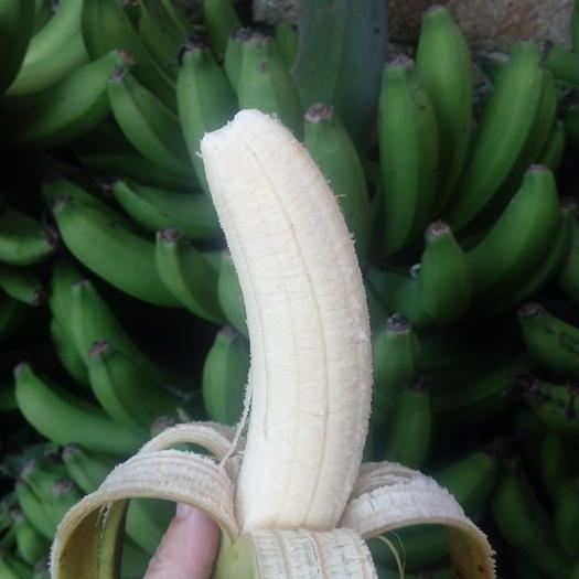 南宁 【限时秒杀】广西高山香甜大香蕉现摘现发 九斤包邮 一件代发