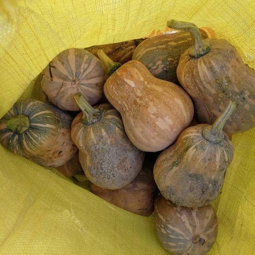 博白县小南瓜 1~2斤 长条形