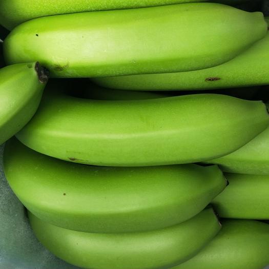 红河屏边苗族自治县威廉斯香蕉 八成熟