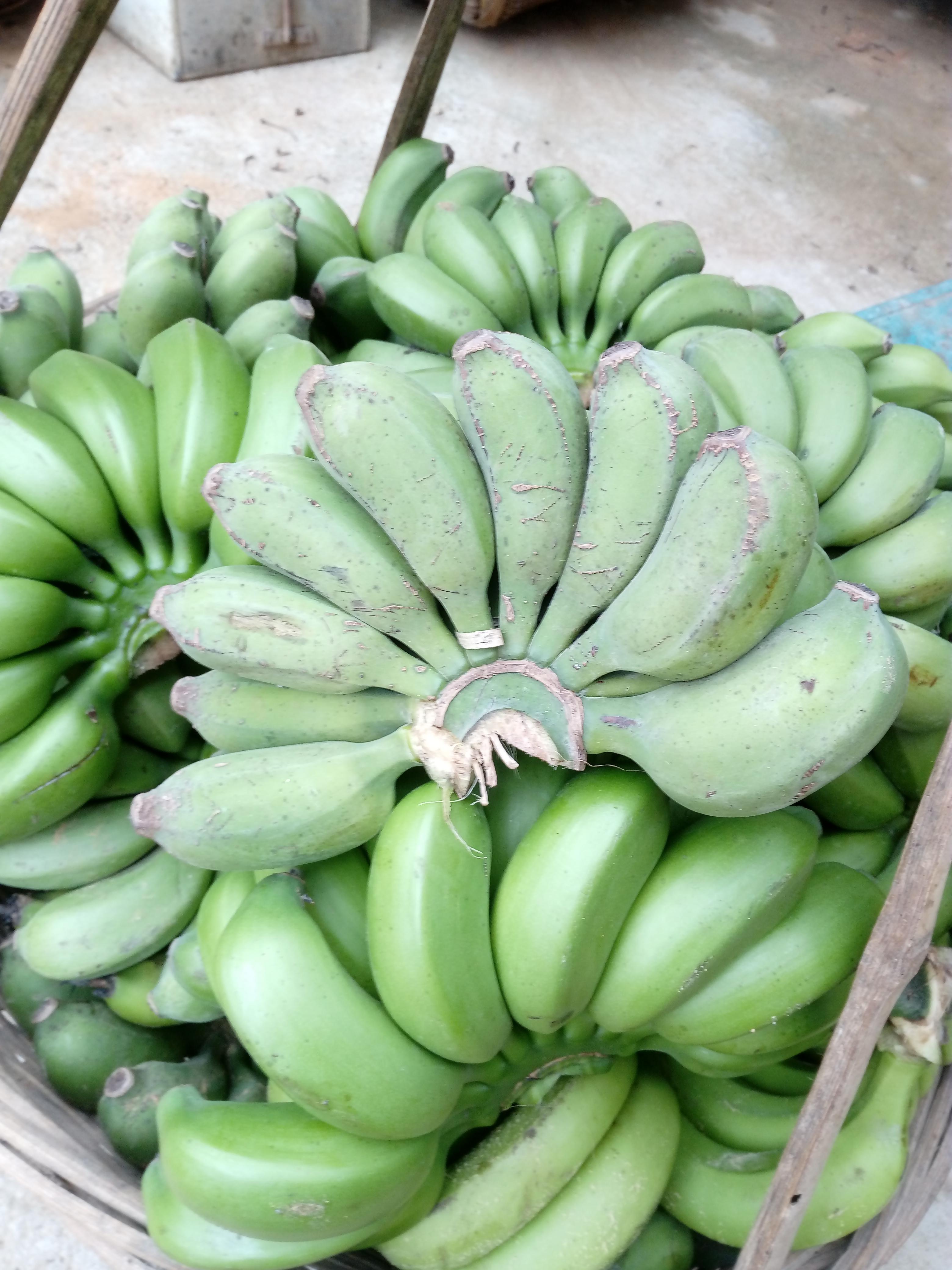 小米蕉 果园直销 小果 实惠九斤装包邮 现摘新鲜发货