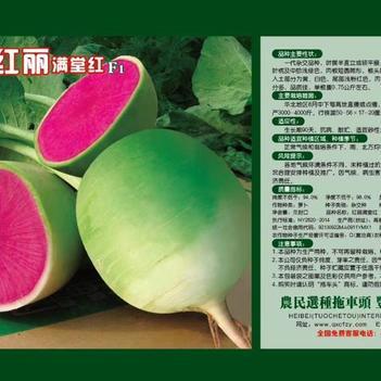 水果萝卜种子 原种