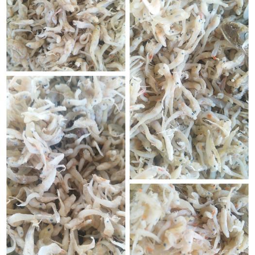 滨州沾化区沙里钻鱼 饲料鱼,斑节虾虾食