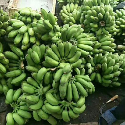 南宁米蕉 八成熟