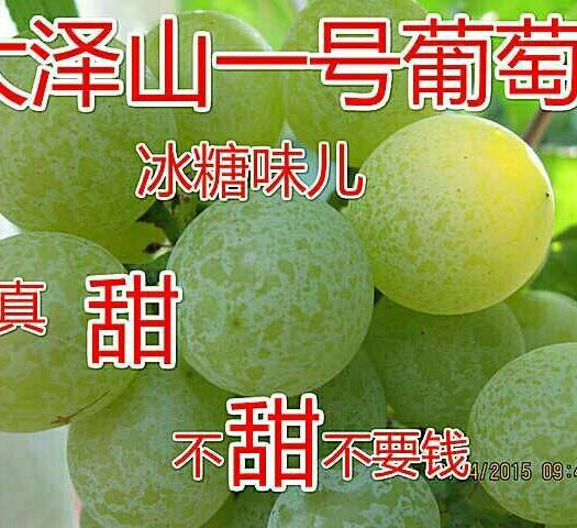 平度市泽山一号葡萄 5%以下 1次果 0.8-1斤