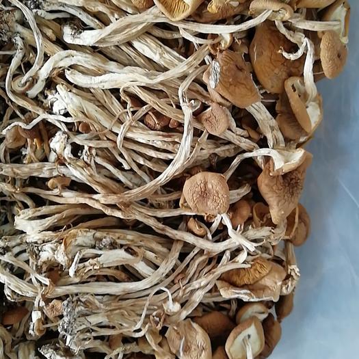 抚州广昌县干茶树菇 箱装 1年以上