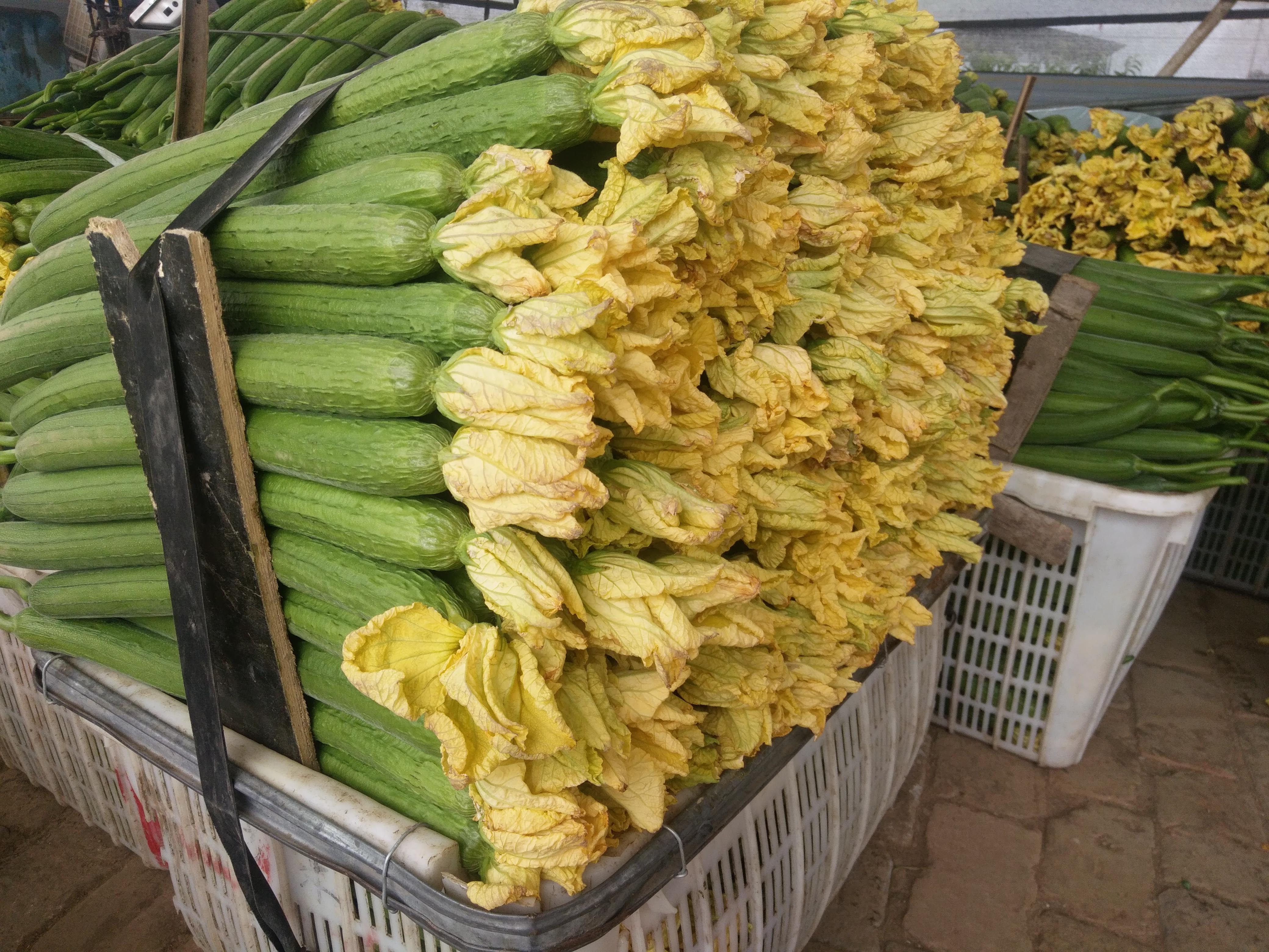 鲜花丝瓜 35cm以上