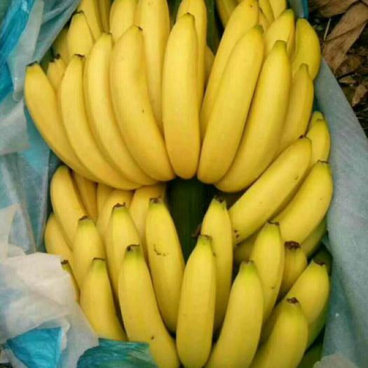 南宁兴宁区 巴西香蕉,威廉斯香蕉,广西甜香蕉非小米蕉红皮香蕉