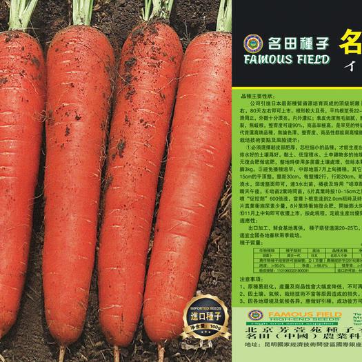 郑州三红胡萝卜种子 ,外形好看口感好,无裂根,收尾好无畸形,产量高