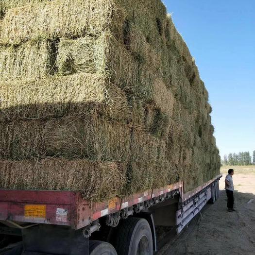 呼伦贝尔海拉尔区苜蓿草种子
