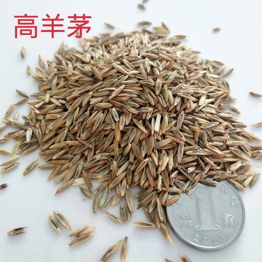 银川兴庆区 高羊茅种子 北方草坪专用 适应性好