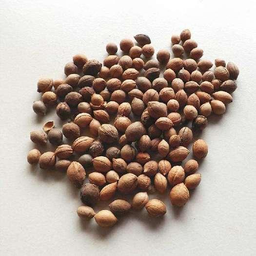 运城绛县 【钙果种子批发市场】_钙果种子价格_钙果种子大全 - 惠农网