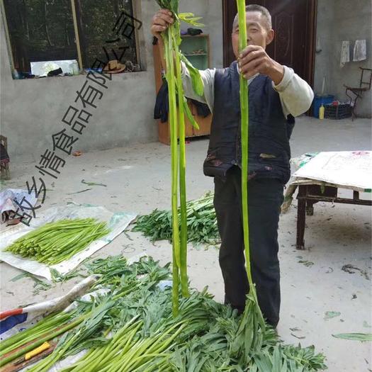 亳州涡阳县 新货无叶贡菜 苔干菜 苔菜干货 安徽特产