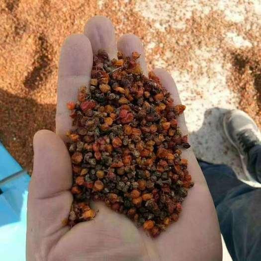 固原 沙棘果供应