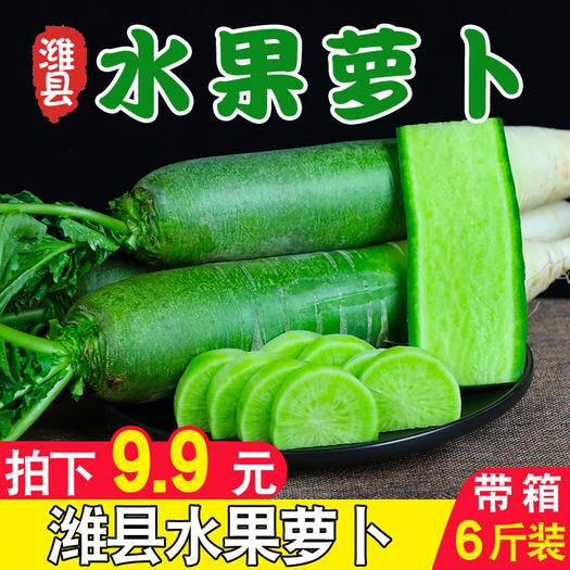 山东省潍坊市寿光市 潍坊潍县青萝卜现发5斤整箱装水萝卜