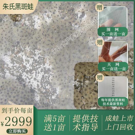 益阳资阳区 黑斑蛙养殖合作 青蛙蝌蚪种苗 低价黑斑蛙苗供应