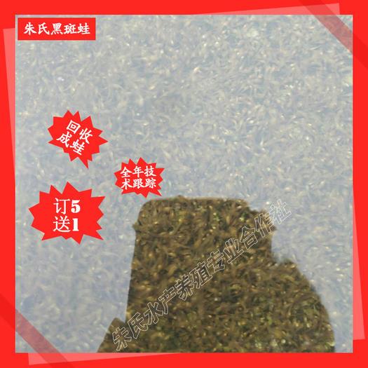 益阳资阳区黑斑蛙苗 人工青蛙养殖基地黑斑蛙优质种苗、黑斑蛙幼苗 成品蛙包回收