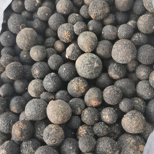 深圳 臍橙枳實~粒徑1.4cm以下