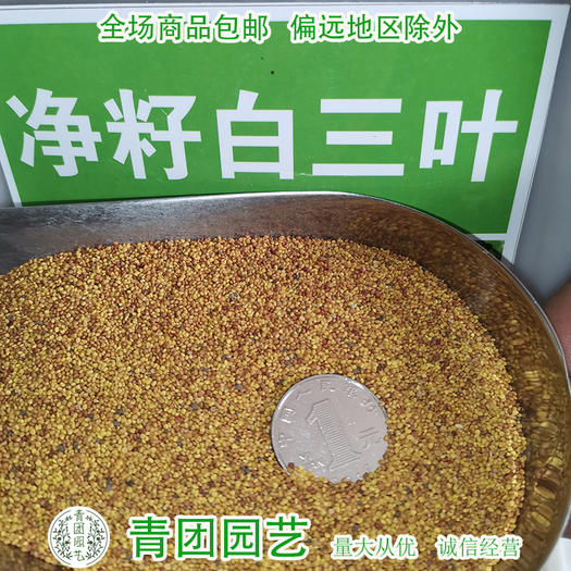 宿迁沭阳县 白三叶种子白三叶草种子包邮白三叶新种子
