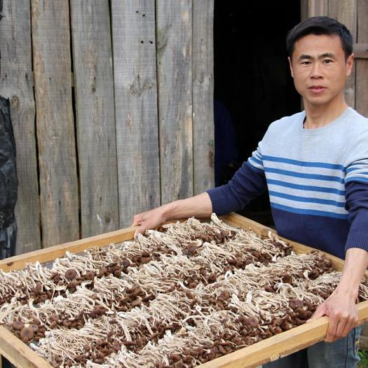 抚州广昌县 广昌茶树菇一件代发,产地直销。