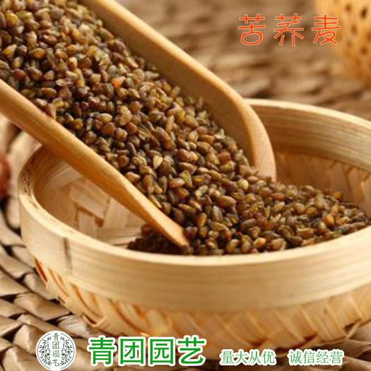 宿迁沭阳县 荞麦种子苦荞麦种子