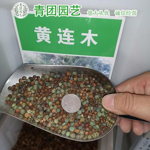 宿迁沭阳县 黄连木种子黄连木新种子包邮