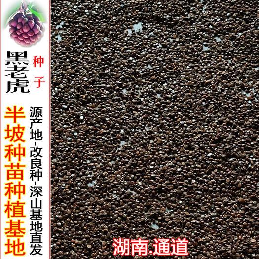 怀化通道侗族自治县黑老虎种子 黑老虎优质种子,2019年新种子,选择果园最好的果子。