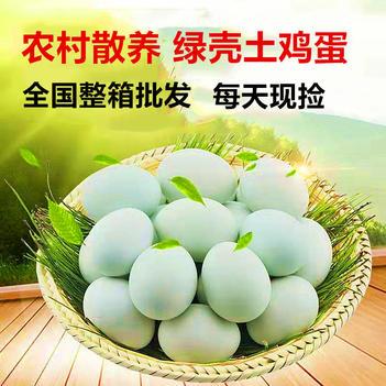 绿壳鸡蛋  全年批发整箱420枚/箱农村散养绿壳土鸡蛋农家鲜艳乌鸡蛋