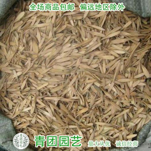 沭阳县 白蜡种子白蜡新种子包邮白蜡种子批发
