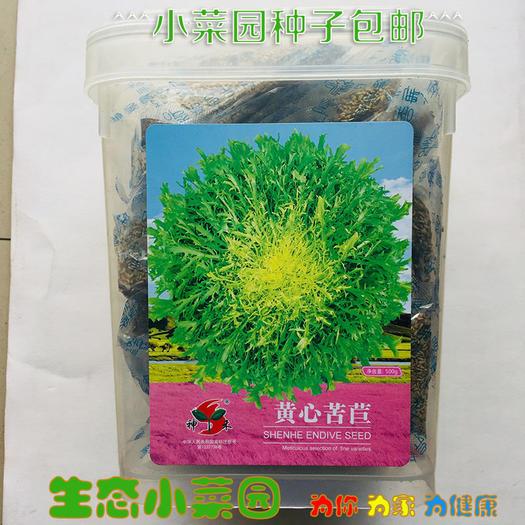 沭阳县 苦苣种子黄心苦苣种子包邮