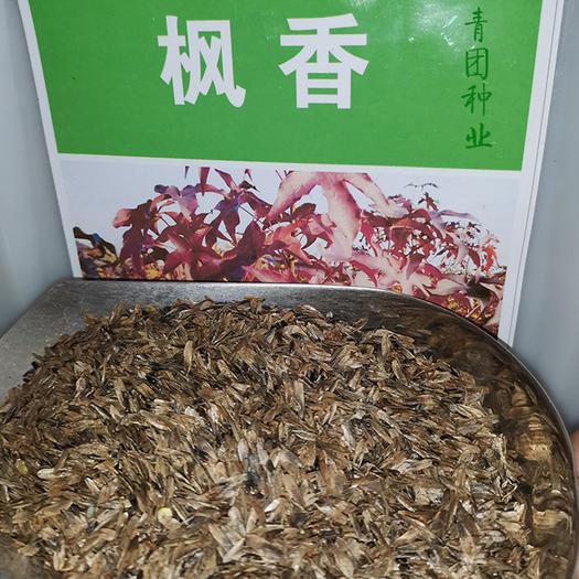 沭阳县 枫香种子枫香新种子包邮