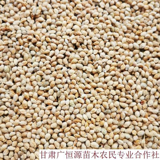 张掖临泽县 供应花棒种子 当年新加工花棒籽种 纯黄货苗圃育苗精心
