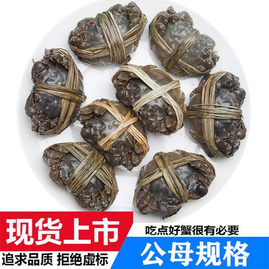 荊州洪湖市 洪湖大閘蟹,現貨螃蟹鮮活,產地直發隔天到,死蟹包賠