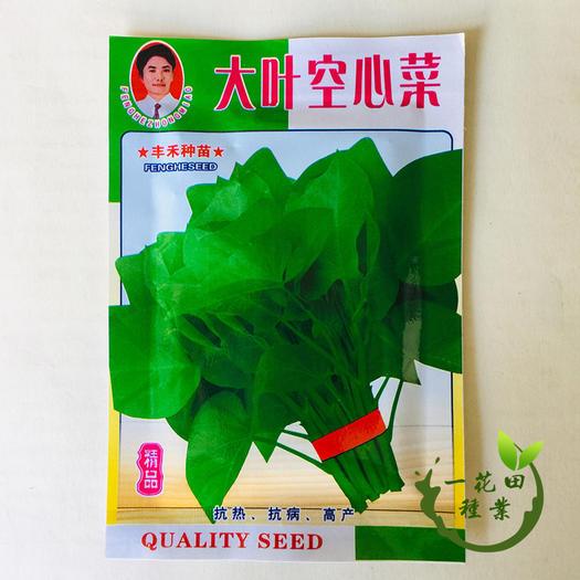 宿州灵璧县 大叶空心菜种子柳叶空心菜种子包邮