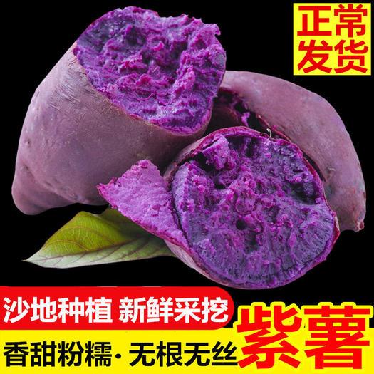 吳川市 新鮮紫薯 農家自種軟糯板栗紅番薯山芋地瓜紫心紅蜜薯 現挖現