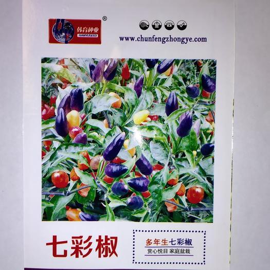 成都锦江区 各种优质辣椒种子袋装散称大量现货包邮
