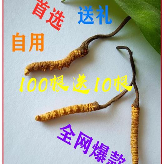 西寧 西藏冬蟲夏草精選正宗無斷草小條蟲草全國順豐包郵