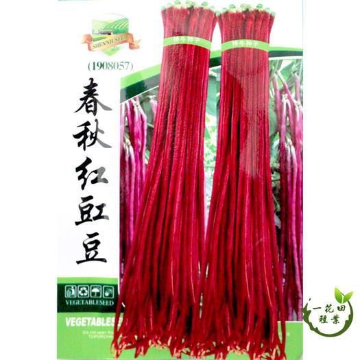 宿州灵璧县 高产豆角种子红豆角种子红眉豆种子
