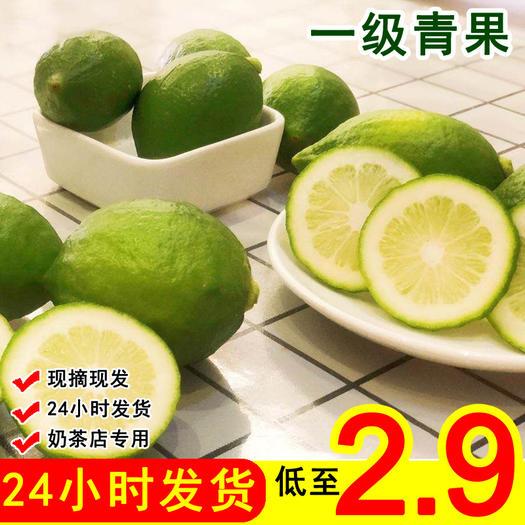 江门台山市 广东无籽香水柠檬果园直发货源 稳定批发