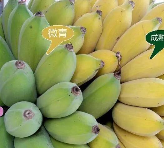 黔西冊亨縣 【順豐】貴州糯米蕉香蕉5斤,發貨為8成熟青皮香蕉