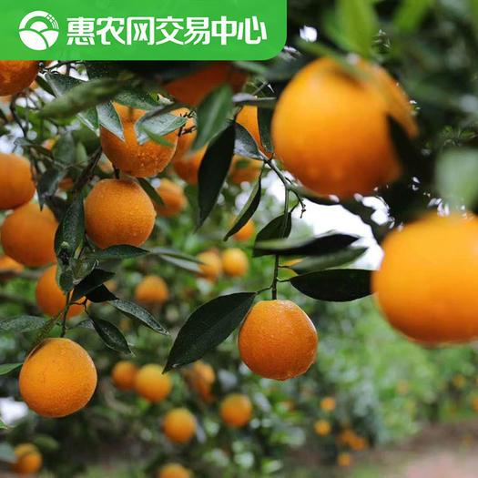 宜昌秭归县秭归脐橙 【惠农网现货】 伦晚脐橙 现货直发