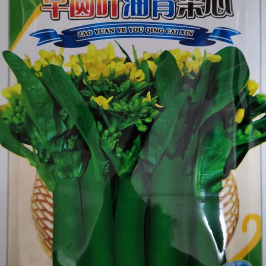 吳川市油菜籽種子 良田早圓葉油青菜心   生長快 質翠爽甜 品性好