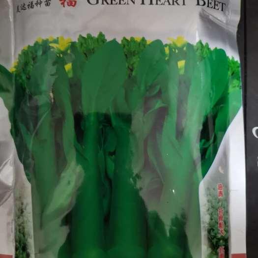 吳川市油菜籽種子 美達福油綠甜菜心609 油青 苔骨粗大 抗雨耐熱