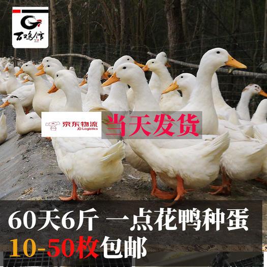 成都龍泉驛區 鴨種蛋一點花鴨蛋可孵化種蛋桃谷鴨白羽肉鴨土鴨肉受精卵包郵