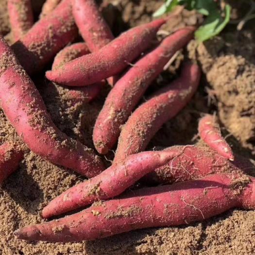漳州漳浦县西瓜红 福建六鳌地瓜红蜜薯
