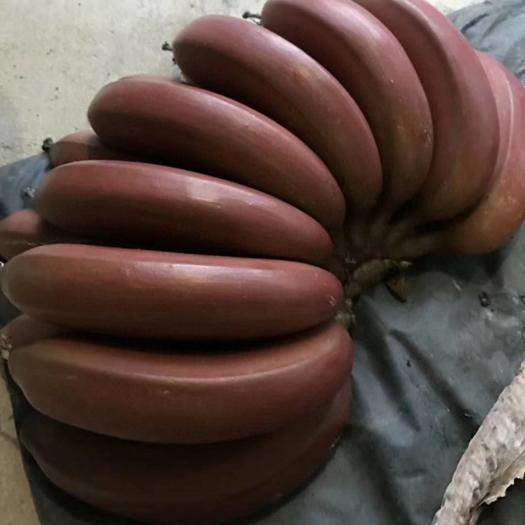 漳州平和縣 福建紅皮香蕉 美人蕉5斤裝